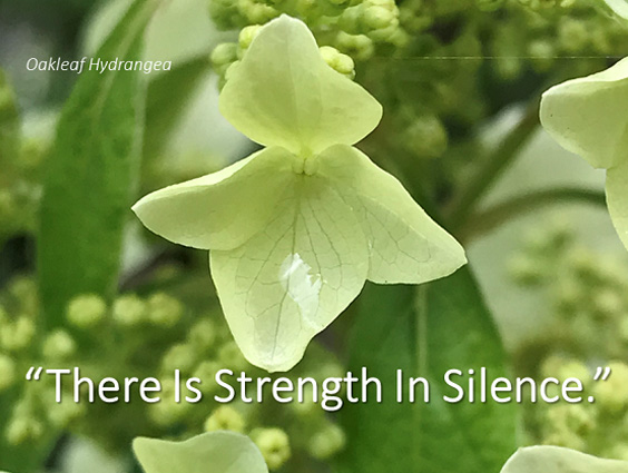 There is Strength in Silence